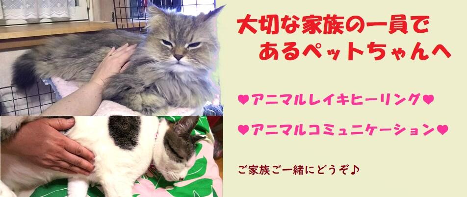 oluolu ka wahi 〜nami cafe〜